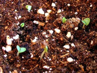 dirt-plants-sprouts-seedlings_w725_h544