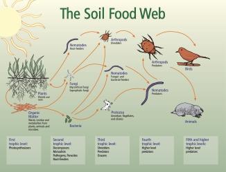 USDA Food Web Graphic