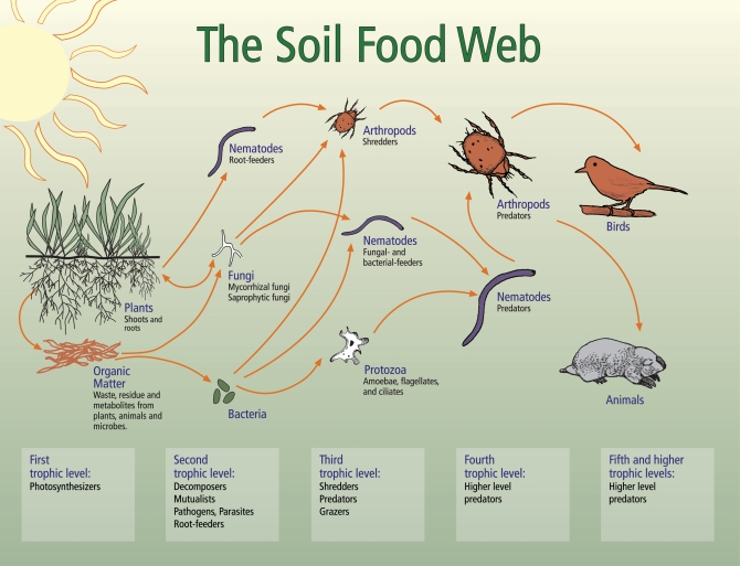 USDA Food Web Graphic